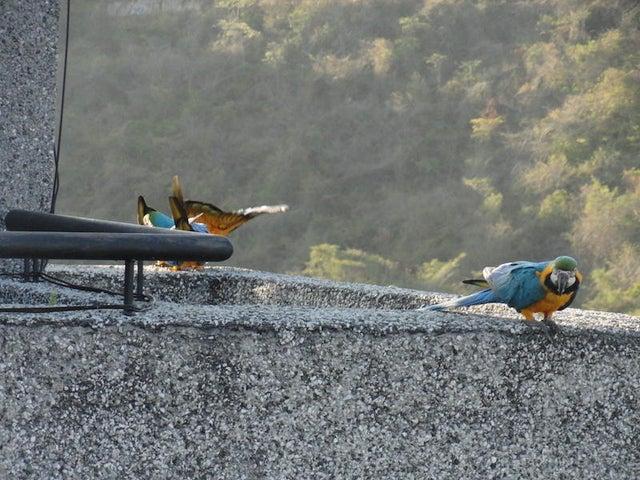Apartamento Distrito Metropolitano>Caracas>Los Samanes - Venta:650.000 Precio Referencial - codigo: 21-25300