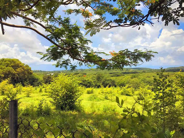 50 acres of prime agricultural with a South Shore view