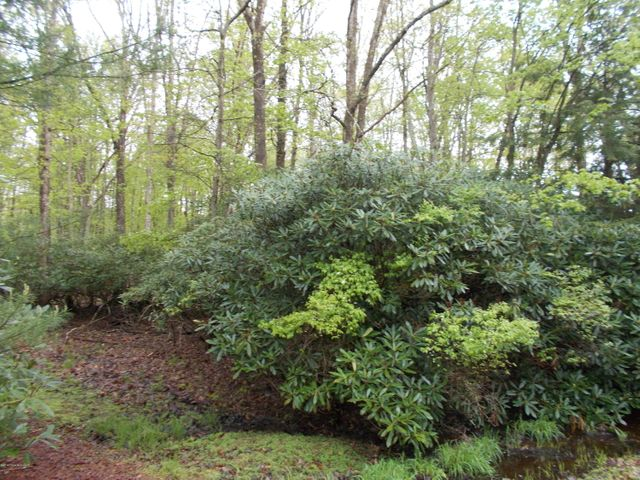 Beech Mountain- Vacant lot to build your new home.  This lot is located in a gated community with many activities including clubhouse, beach and sports. Land is next to a ten foot ''green belt.''