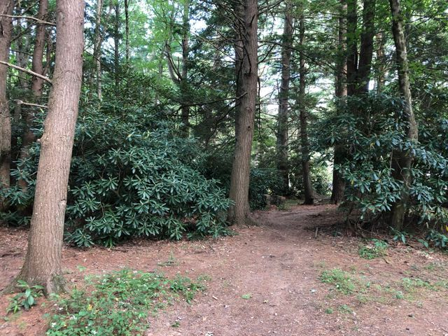 Drums Recreation Land-  Wooded 1/2 acre plus lot located on the banks of the Nescopeck Creek...  this property is a great place to do some fishing, or to relax for a picnic. Priced to sell!