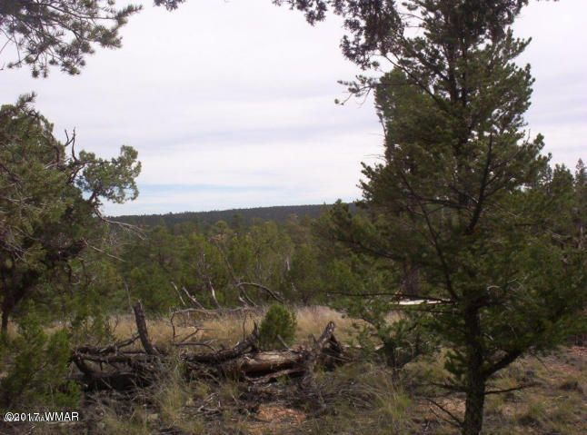 WHAT A BEAUTIFUL PIECE OF LAND! HAS A LITTLE BIT OF EVERYTHING. 5 ACRES OF HEAVILY TREED MOUNTAIN PROPERTY WITH FANTASTIC VIEWS. LEVEL SITES TO BUILD YOUR HOME OR SET UP A MANUFACTURED HOME. YOU CAN DRILL YOUR OWN WELL OR HAVE WATER DELIVERED. CALL FOR DETAILS.
