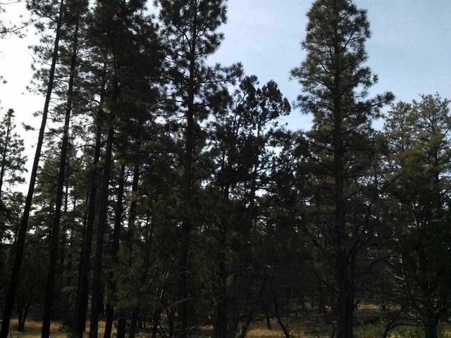 10 Acres Porter Mountain And Sponsellor, Lakeside, AZ 85929