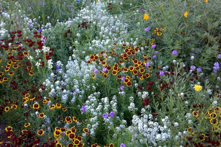 Gorgeous Wildflowers Every Summer