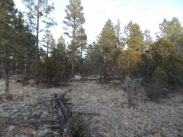 Hard to find large treed parcel such as this 10.47 acres and close to USFS!!  At this price you can put in a well and have your own little private and secluded Homestead!!!