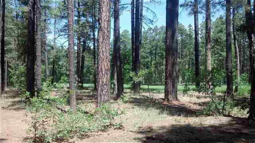 3376 Red Robin Road, Pinetop, AZ 85935