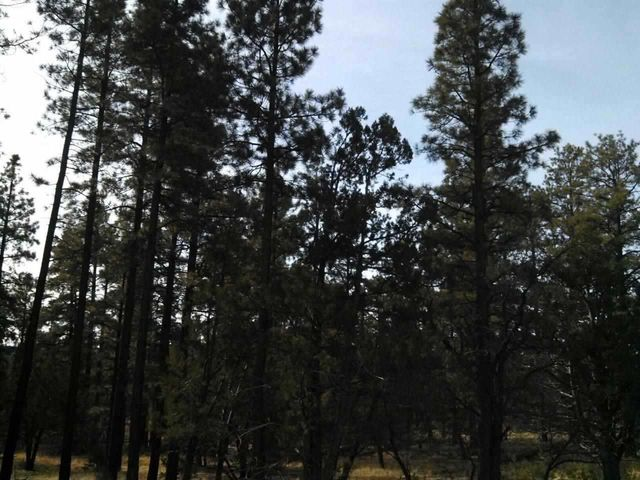 26.79 Acre Porter Mountain & Sponseller Road, Lakeside, AZ 85929