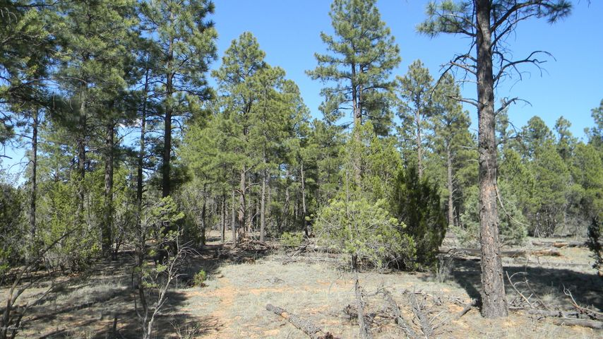 Absolutely beautiful 1.48 acre parcel in a secluded area in Overgaard. Mix of tall ponderosa pine and cedar trees, several clear, level areas for building. Shared well on adjoining lot, well agreement indicates $200 one-time to connect, $50 per month fee for use. Power is to lot line. At the end of a long dirt road, so expect very little traffic. A must-see property.