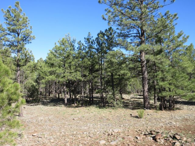 108 Lone Horseman Road, Lakeside, AZ 85929