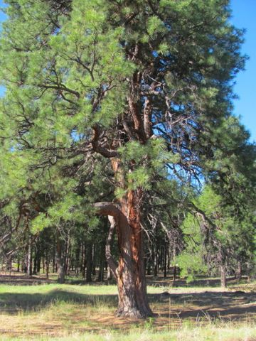 Stunning .54 Acre Lot to Build Your Dream Home in Williams AZ.